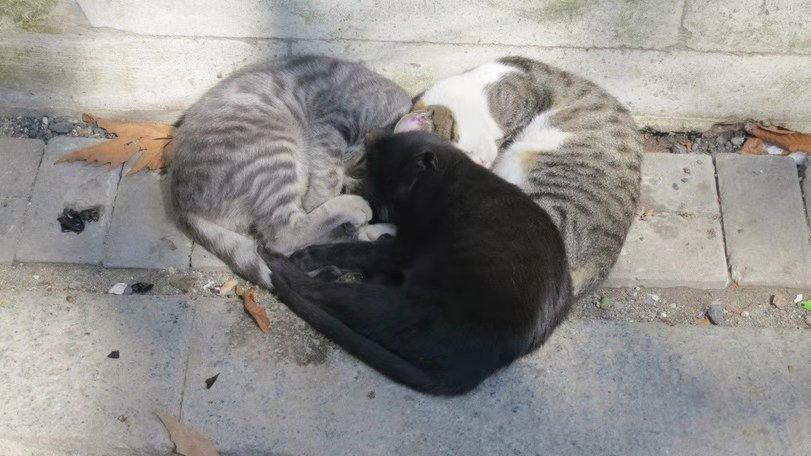 爱心三只猫